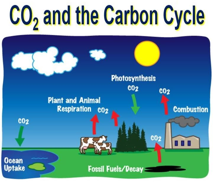 an introduction to the element carbon dioxyde