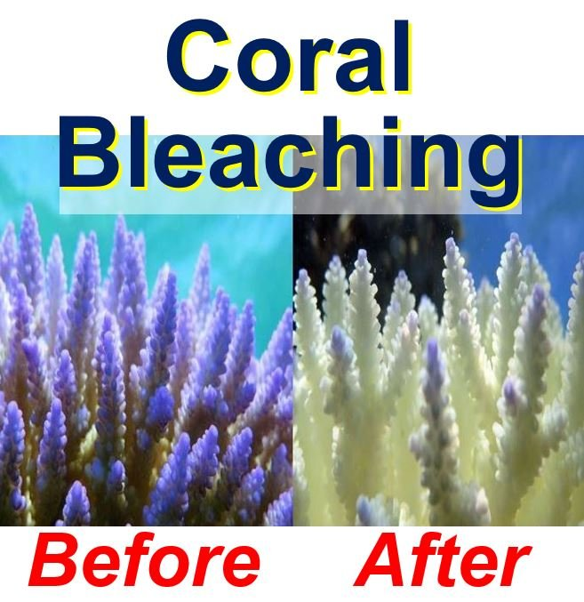 Coral bleaching and its impact
