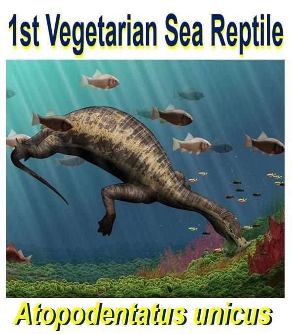 First plant eating marine reptile