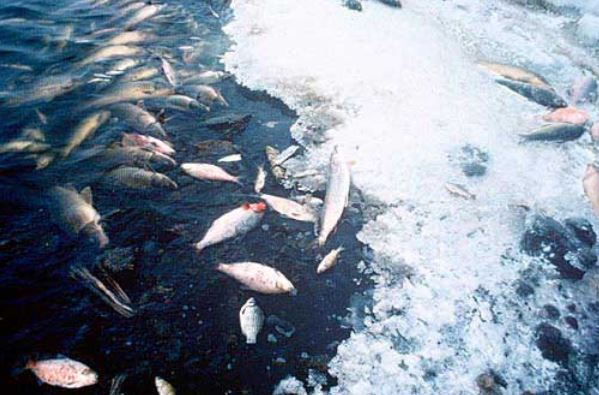 Fish kills due to low oxygen levels