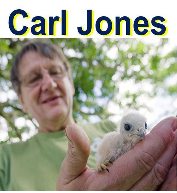 Prof Carl Jones holding a Mauritius kestrel fledgling