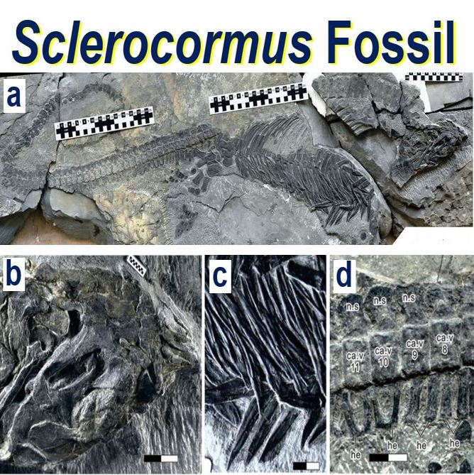 Sclerocormus fossil after mass extinction
