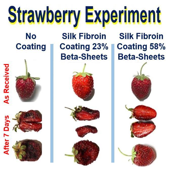 Silk coating strawberry experiment