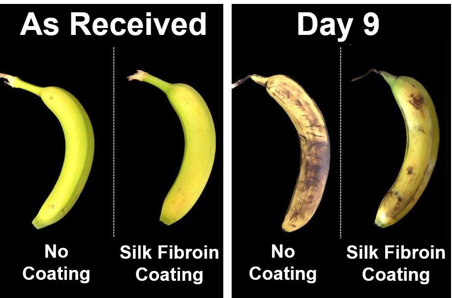 The Banana Experiment silk solution
