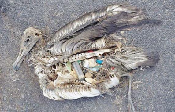 Bird plastic inside