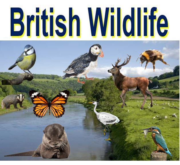 British wildlife relies on strong environmental laws