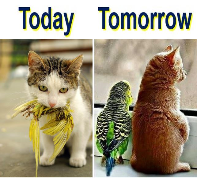 Cat and birds today and tomorrow