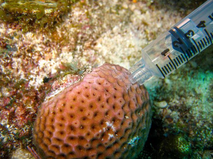 Coral microbiome