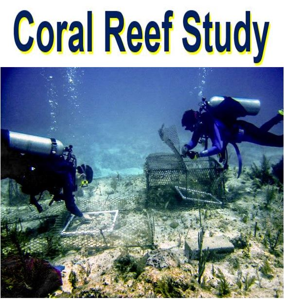 Coral reef decline divers in a study