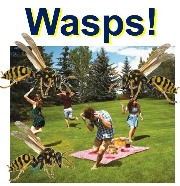 Dealing with a wasp