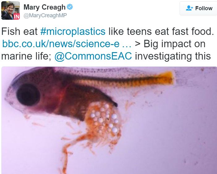 Mary Creagh MP on microbeads and baby fishes