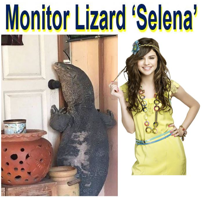 Monitor Lizard tries to break into home