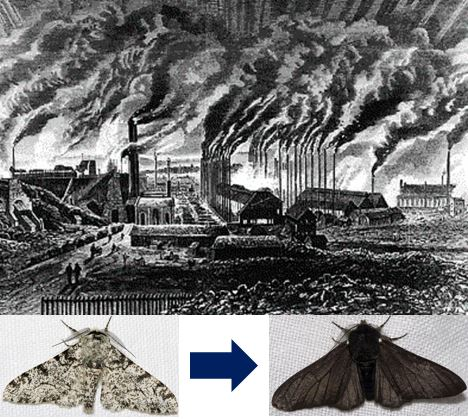 Moth changed during the Industrial Revolution