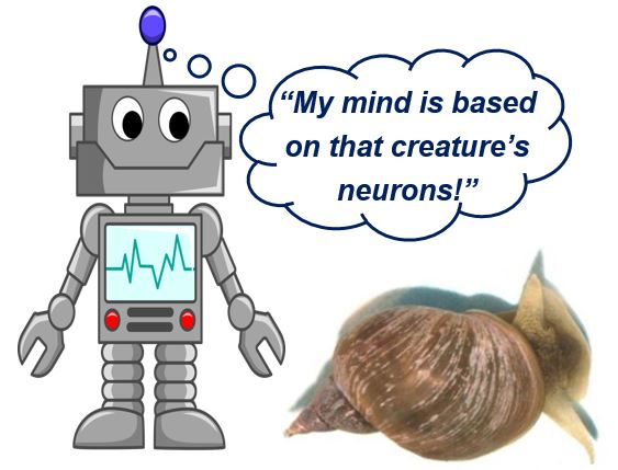 Snail brain and robot brain