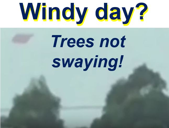 Windy day trees not swaying