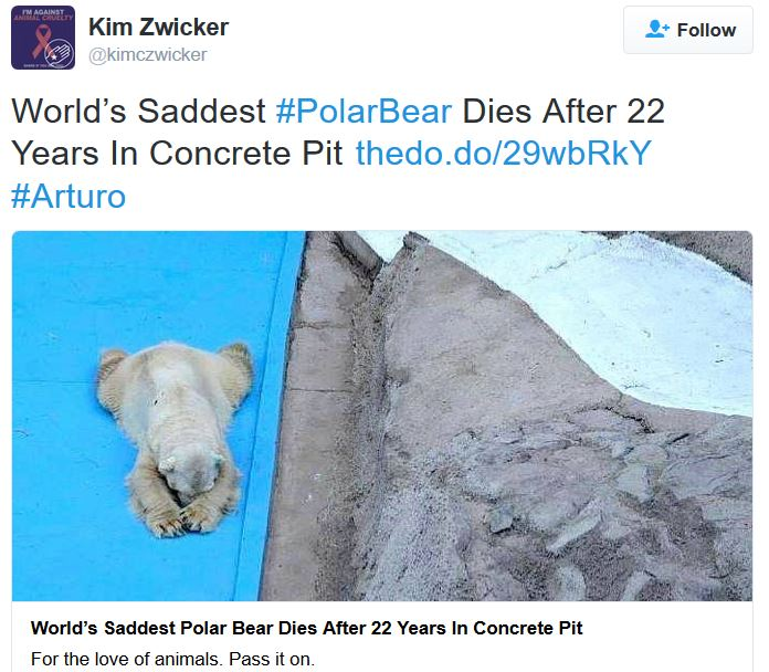 Another sad polar bear dies