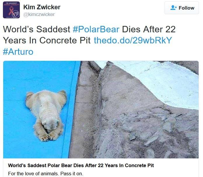 Another sad polar bear dies