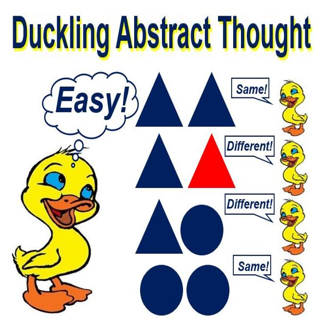 Duckling Abstract Thought capability