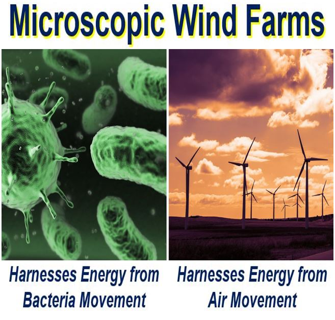 Microscopic wind farms bacteria and wind energy