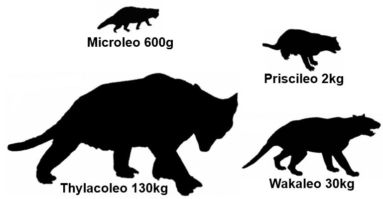 Different sized marsupial lions