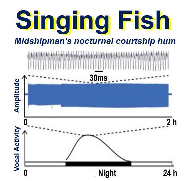Singing Fish Behaviour Patterms