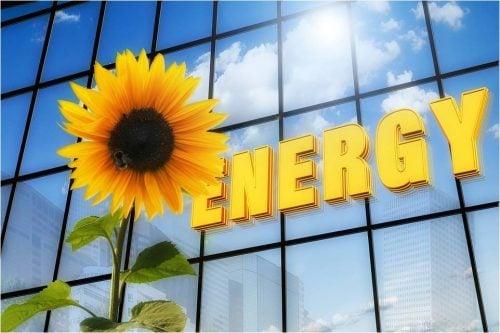 energy demand sunflower and windows