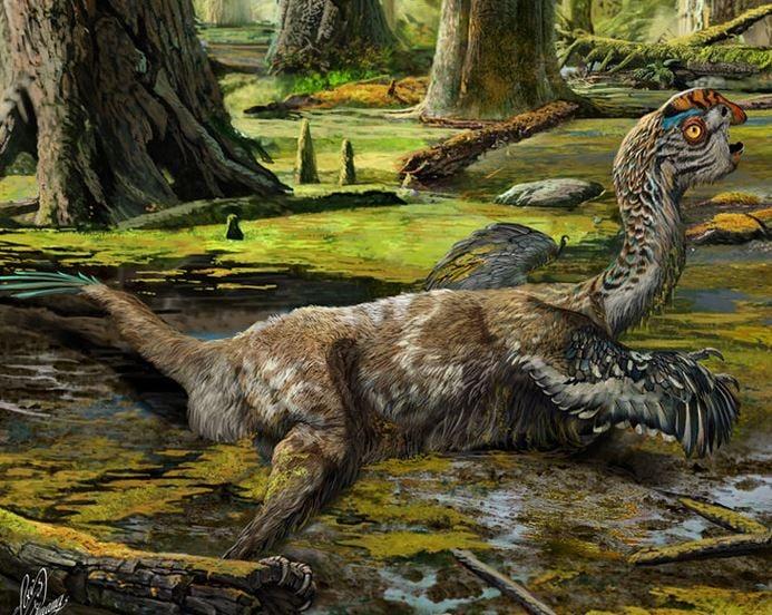 Artist's reconstruction of the bird-like dinosaur