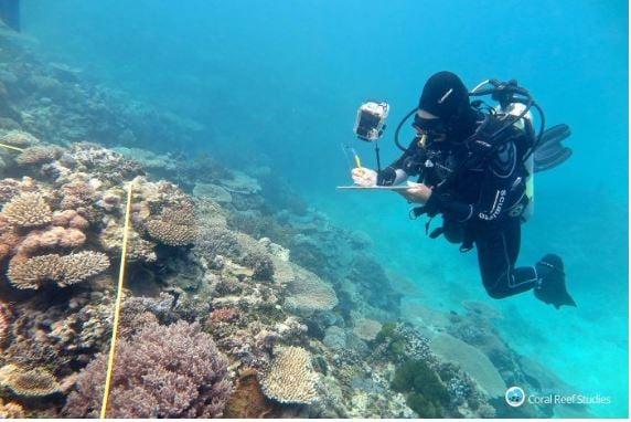 examining corals