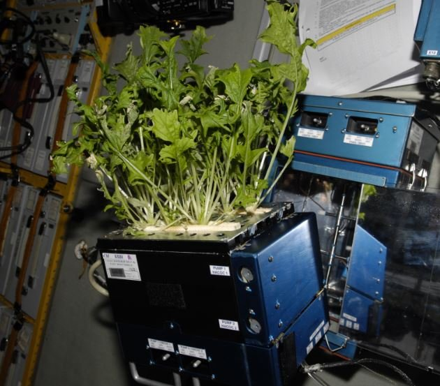 what do astronauts eat in space for breakfast lunch and dinner - photo #45