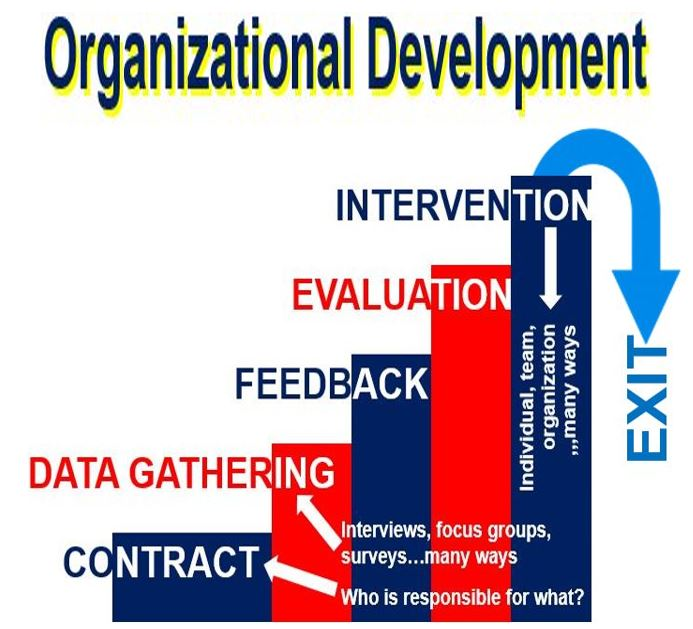 Organizational Development initial stages