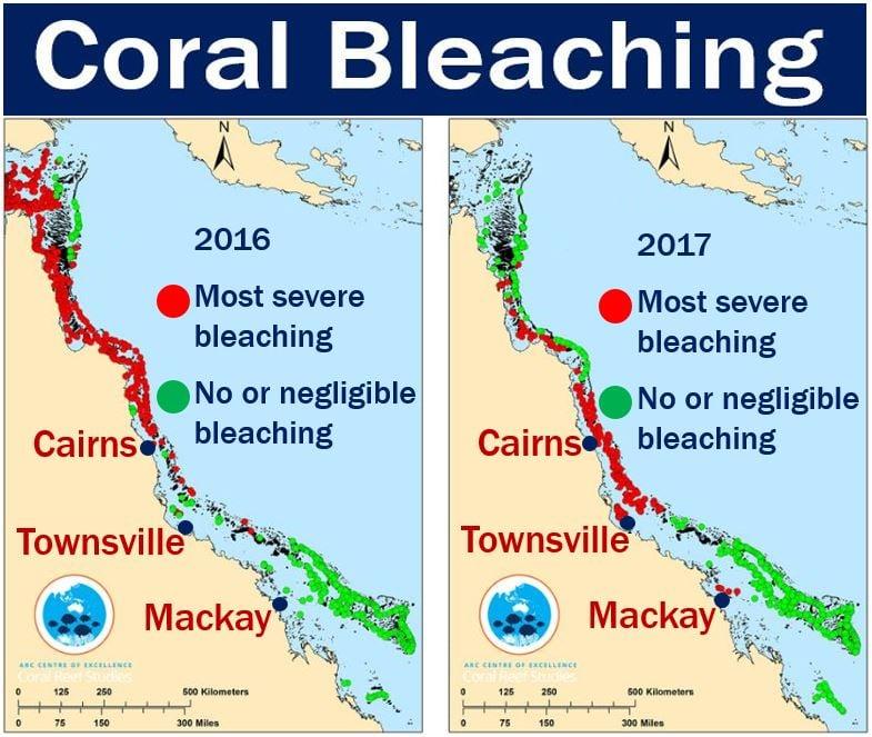 Coral bleaching - Great Barrier Reef
