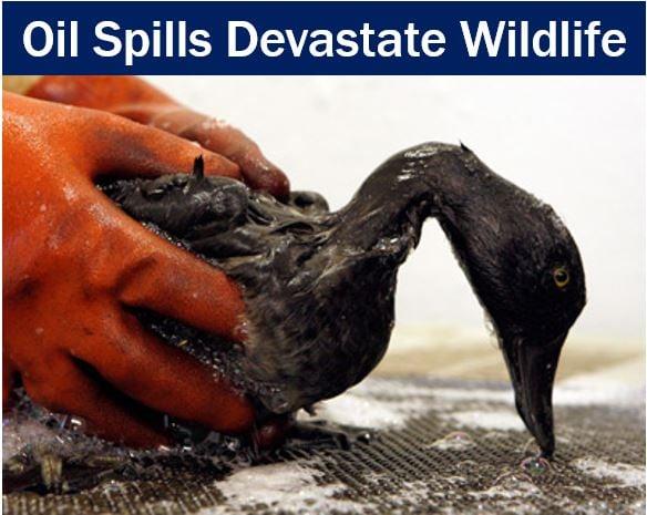 Oil spills devastate wildlife