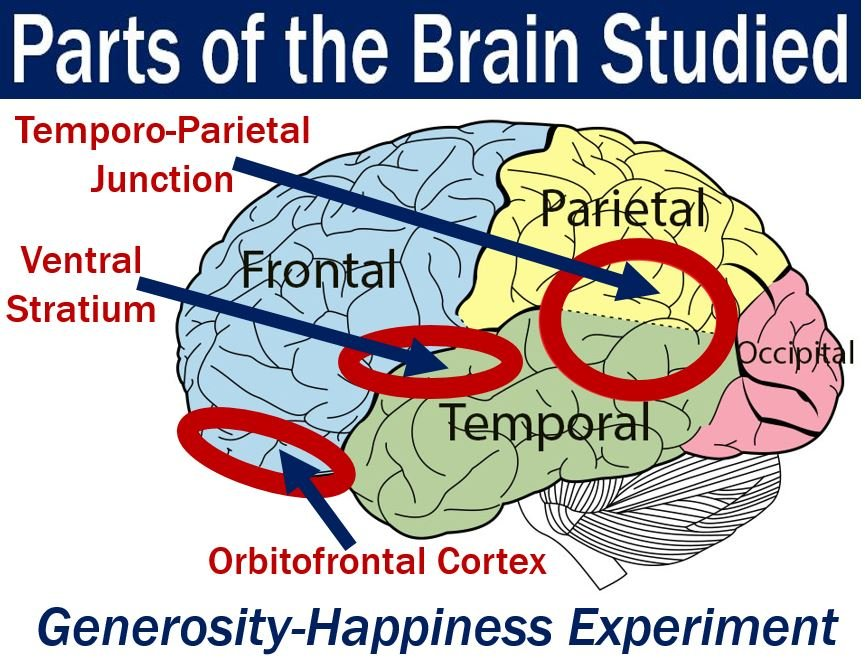 Parts of brain studied in generous people experiments