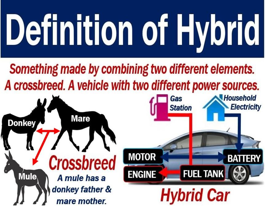 Hybrid Definition And Two Examples
