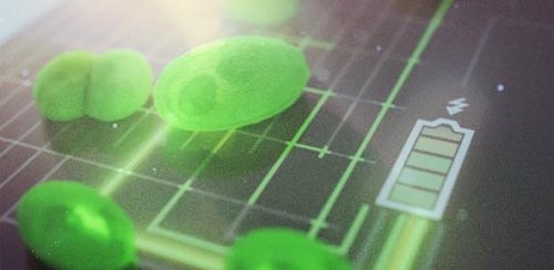 algae-based solar cells artist impression