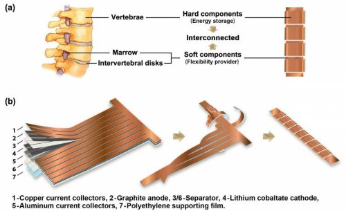 flexible lithium ion battery and human spine schematic