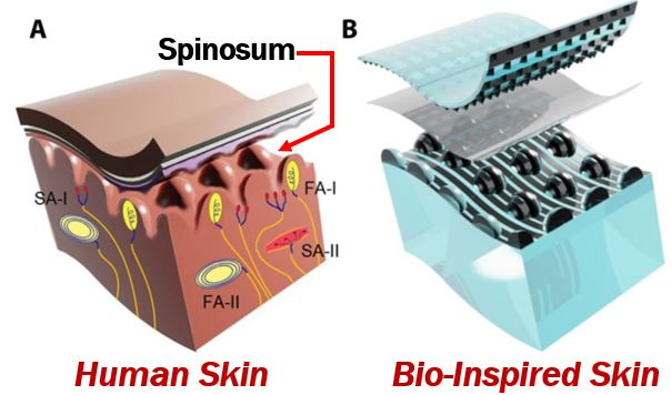 Skin of the electronic glove vs human skin