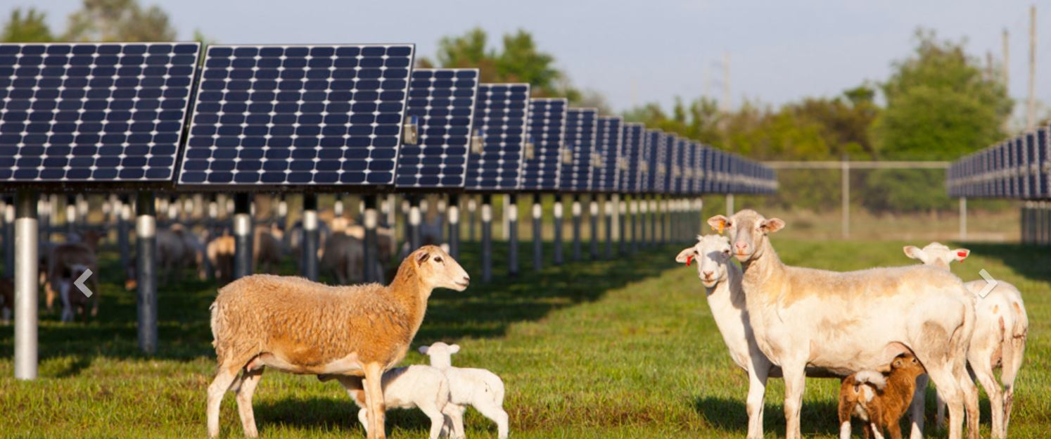 FPL solar power plant - image